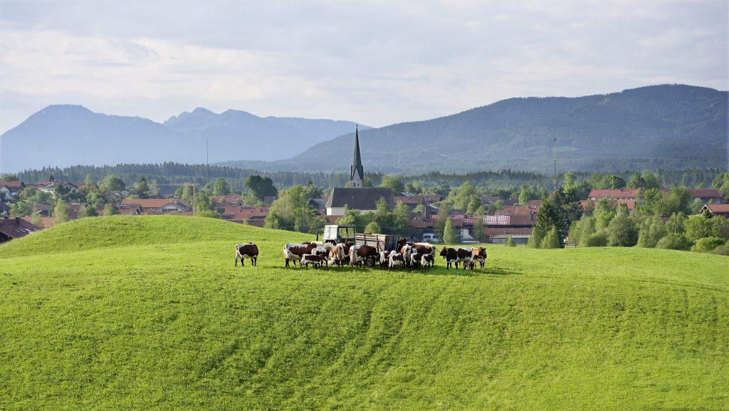 www.klosterbraeustueberl.de